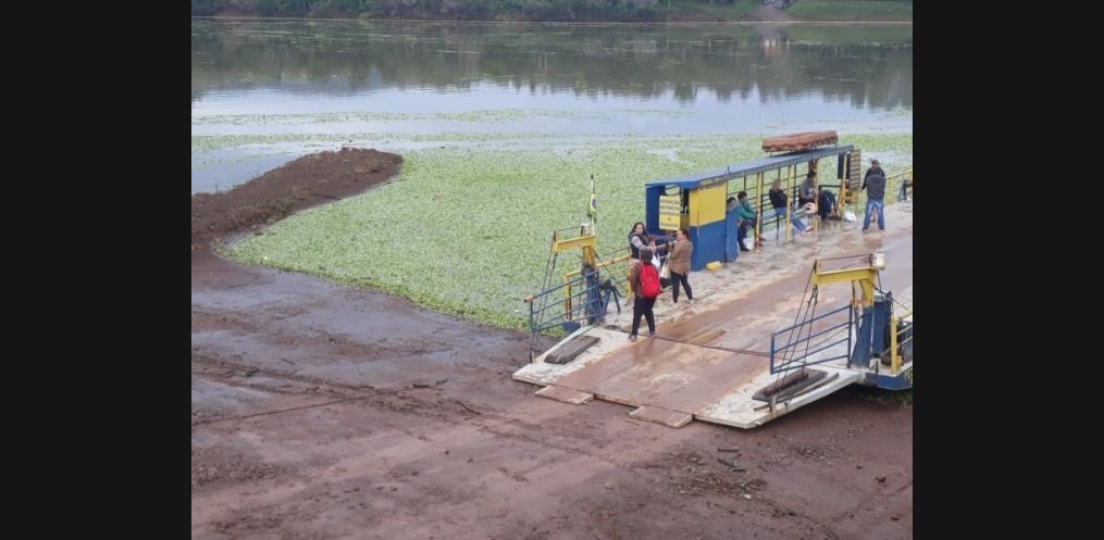 Rio Uruguai em Mondaí é tomado por plantas da água (Foto: Divulgação/WhatsApp))