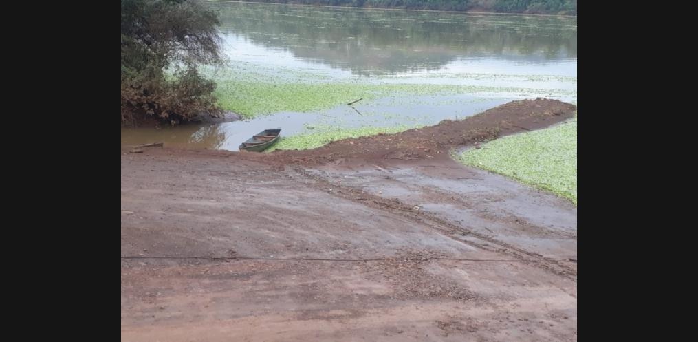 Rio Uruguai em Mondaí é tomado por plantas da água (Foto: Divulgação/WhatsApp)
