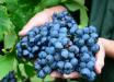 Agricultura investirá R$ 1 milhão para proteger a fruticultura do granizo