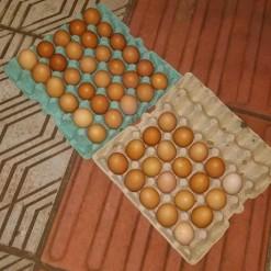 Casal é preso após furtar ovos e cadeiras em Mondaí