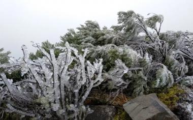 A vegetação amanheceu toda branca coberta de sincelo em Urupema
