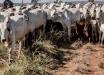 Especialistas discutem desafios e melhorias da pecuária de corte no Oeste