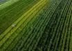 Estado investe R$ 36,9 milhões em apoio ao setor agropecuário catarinense