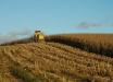 Estimativas da safra de verão para SC é de aumento na produção de milho e soja