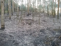 Idoso morre carbonizado em incêndio florestal