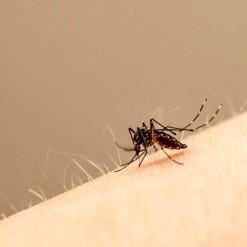 Jovem de Cunha Porã morre com suspeita de dengue
