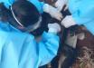 Macaco é encontrado morto no Extremo-Oeste