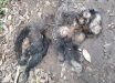Mais um macaco é encontrado morto no interior de São João do Oeste