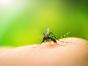 São Miguel do Oeste tem 54 casos de dengue confirmados