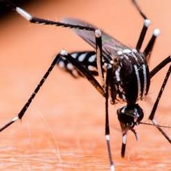 SMO irá declarar Estado de Emergência em decorrência da dengue