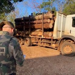 Toras de araucária, ameaçada de extinção, são apreendidas pela Polícia Ambiental